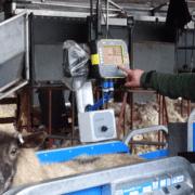 Conon Brae Sheep Farm