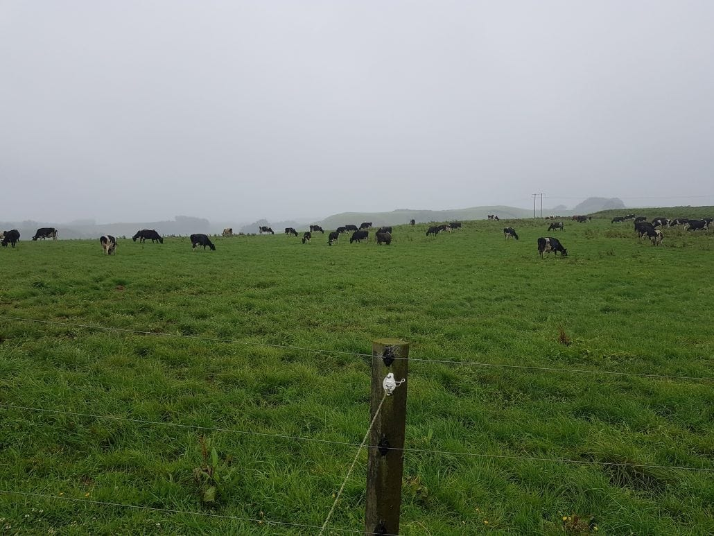 Precision agriculture technology opportunities in New Zealand