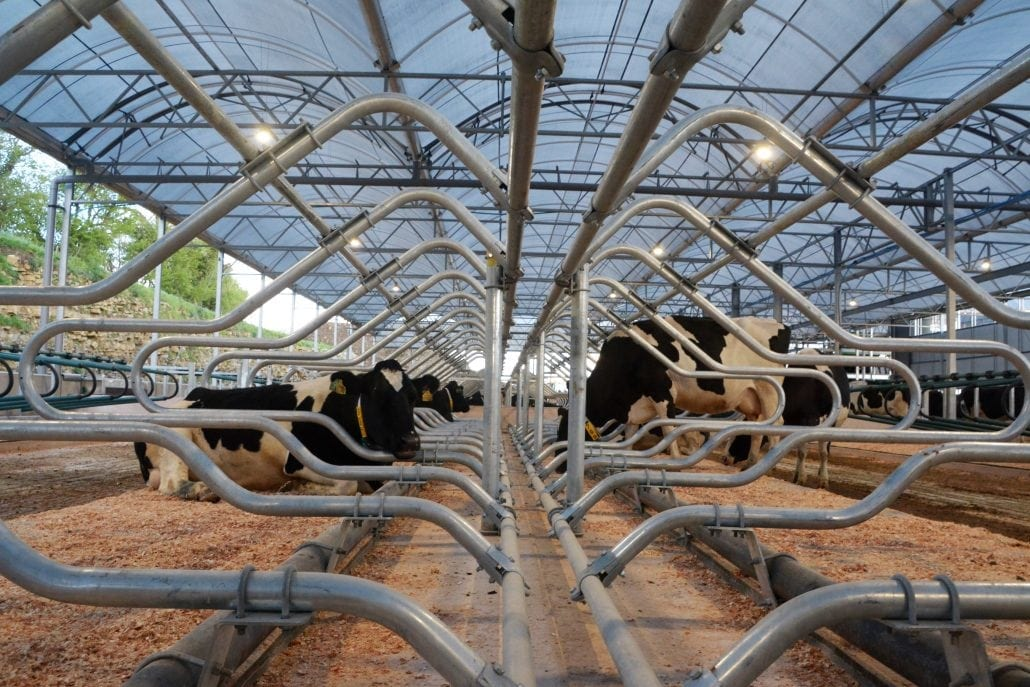 Agri-EPI South West Dairy Development Centre - cows in K38