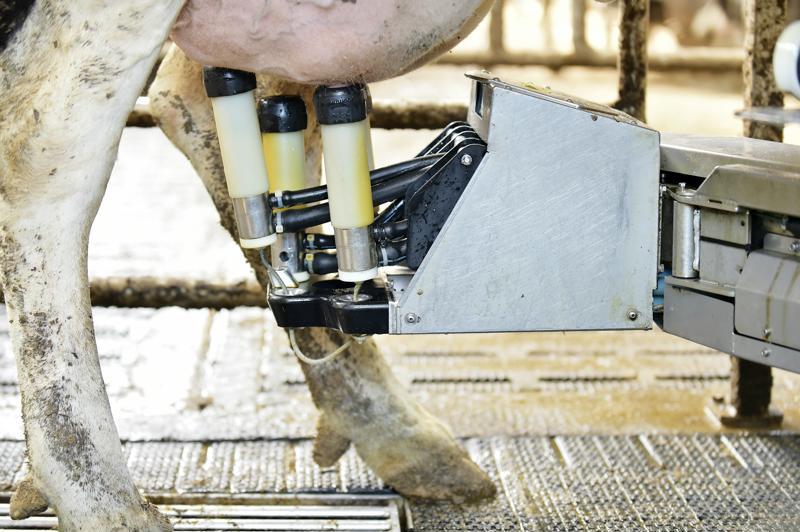 International rural conference visits Parkend Farm - robotic milker