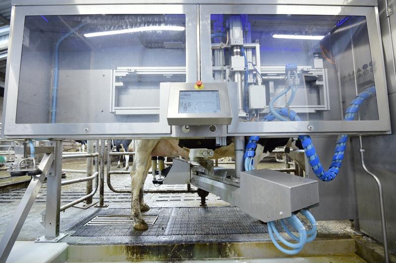 International rural conference visits Parkend Farm - dairytech