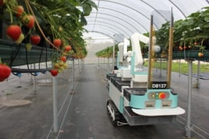 Strawberry picking robot by Dogtooth Technologies
