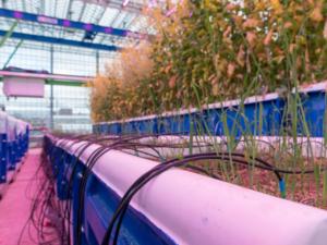 Agri-EPI Glasshouse Phenotyping Platform at Cranfield University campus