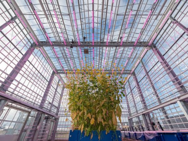 Agri-EPI Soil and Crop Technology | Glasshouse Phenotyping Platform