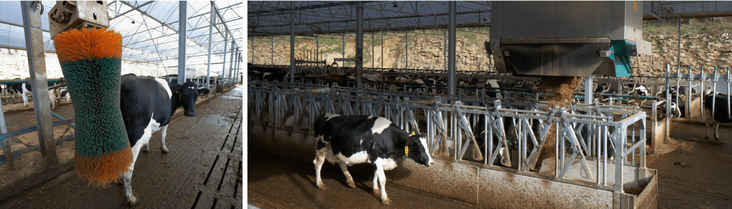 Agri-EPI South West Dairy Development Livestock Farming