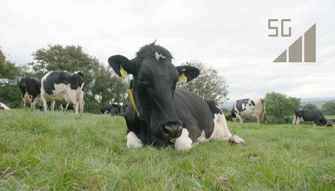 Agri-EPI Connectivity 5G RuralFirst South West Dairy Development Centre