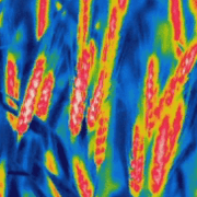 Wheat yield prediction research BioSense Institute - Thermal image