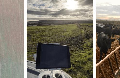 A Dark Horse on the crop monitoring scene news - Bielgrange Farm