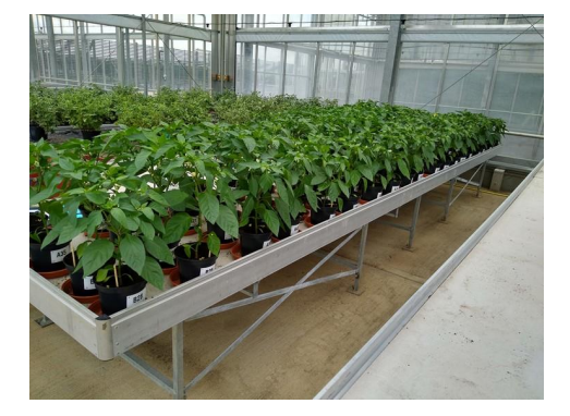 Research crop | Aquapulse Water Technology