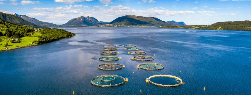 SeaCAP UK Seafood Innovation Aquaculture project | Agri-EPI News