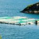Blog Transformation of Scottish salmon production | Agri-EPI Aquaculture Solutions | SeaCAP 6000
