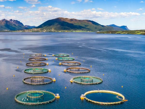 SEAcap 6000 scottish salmon farming open water engineering