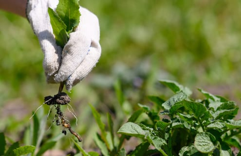 Omega Crop Disease and Weed Detection Agri-Tech