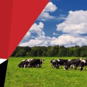 Agri-EPI Centre - Grazing cows